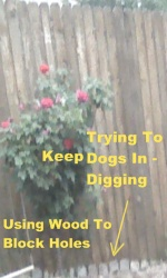 blocking holes dug by dogs
