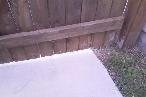 Fence Gate Chewed By Dogs